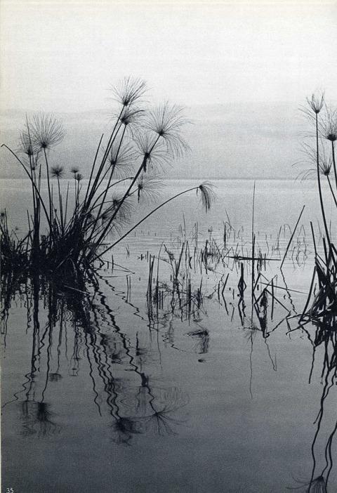 """פטר מירום, מתוך """"שירת האגם הגווע"""", הוצאת דבר, תל אביב, 1960"""