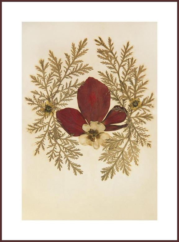 """1917 #1, 2012, צילום סטילס, הזרקת דיו ארכיבי על נייר ארט,  135 על 100 ס""""מ"""